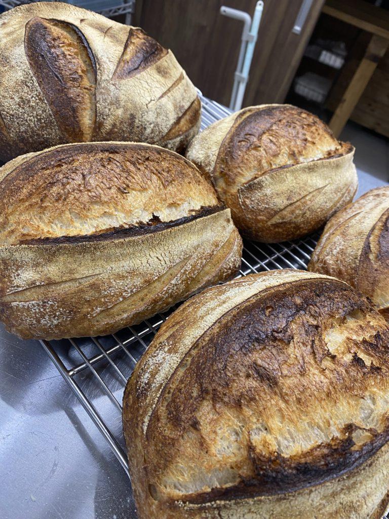 Sourdough 自家栽培小麦と古代小麦アインコーン全粒粉使用
